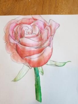 Rose - Elijah Jones