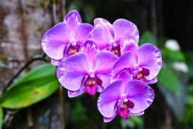 Flower - Jasher