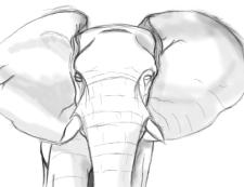 Elephant - Elijah