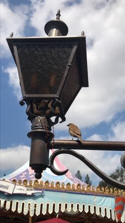 Bird Nest - G10